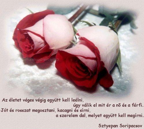 www.tvn.hu_762e8f3bc30618a9330763c071b9f1ac